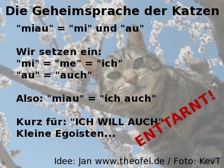 Die Geheimsprache der Katzen